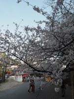 満開になった和歌山城の桜。多くの人たちが思い思いに写真を撮り合っていた=和歌山市一番丁で2018年3月27日、山成孝治撮影