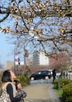 開花し始めた桜を見つめる親子=富山市の松川べりで2018年3月27日、鶴見泰寿撮影