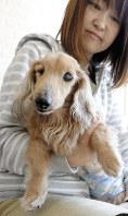 スタッフに抱かれる15歳のチェリー=東京都大田区の東京ペットホームで