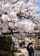 華やかに咲く郡山城跡一帯の桜=奈良県大和郡山市で2018年3月28日、熊谷仁志撮影