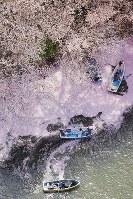 ボートに乗り桜を楽しむ人たち=東京都千代田区の千鳥ケ淵で2018年3月31日、本社ヘリから和田大典撮影