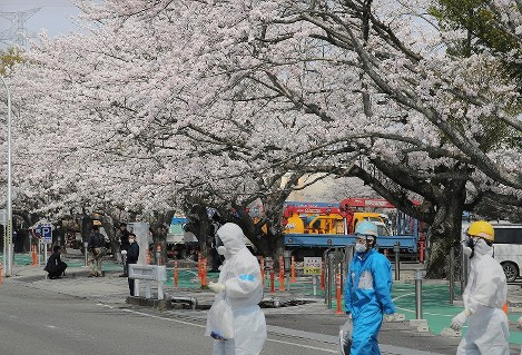満開を迎えた東京電力福島第1原発構内の桜並木=福島県大熊町で2018年4月4日午後0時6分、喜屋武真之介撮影