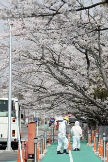 満開を迎えた東京電力福島第1原発構内の桜並木の下を歩く作業員ら=福島県大熊町で2018年4月4日午前11時31分、喜屋武真之介撮影