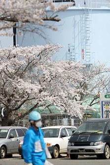 満開を迎えた東京電力福島第1原発構内のソメイヨシノ。そばには汚染水の処理水が入ったタンクが並ぶ=福島県大熊町で2018年4月4日午前11時58分、喜屋武真之介撮影