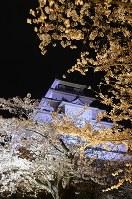 天守閣とともにライトアップされた鶴ケ城公園の桜=福島県会津若松市追手町で2018年4月6日、湯浅聖一撮影