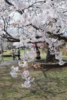 写真を撮りながら桜を楽しむ花見客=新潟県柏崎市緑町の赤坂山公園で2018年4月10日、内藤陽撮影