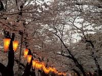 東京・上野公園で=梅津時比古撮影