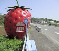 イチゴのバス停。メロンのバス停(右手奥)と一緒に撮影できるポイントとして人気だ=長崎県諫早市小長井町で4月12日、足立旬子撮影