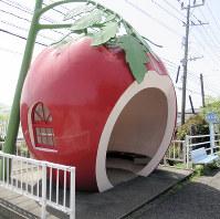 トマトのバス停=諫早市小長井町で4月12日、足立旬子撮影