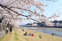 桜や陽気に誘われ、犀川河川敷に集う市民ら=金沢市で、横田美晴撮影