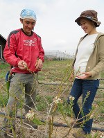 生育途中のブルーベリーの木を見つめる郁美さん(右)と慧さん