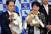 Japanese Akita puppy Masaru that was offered to Russian figure skater Alina Zagitova, right, and her sibling, are seen held by her owners Emiko Hamada and Masami Hamada, respectively, in Odate, Akita Prefecture, on May 3, 2018. (Mainichi)