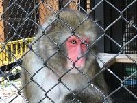 大内山動物園の最古参「モモ」おばあちゃん=大内山動物園提供