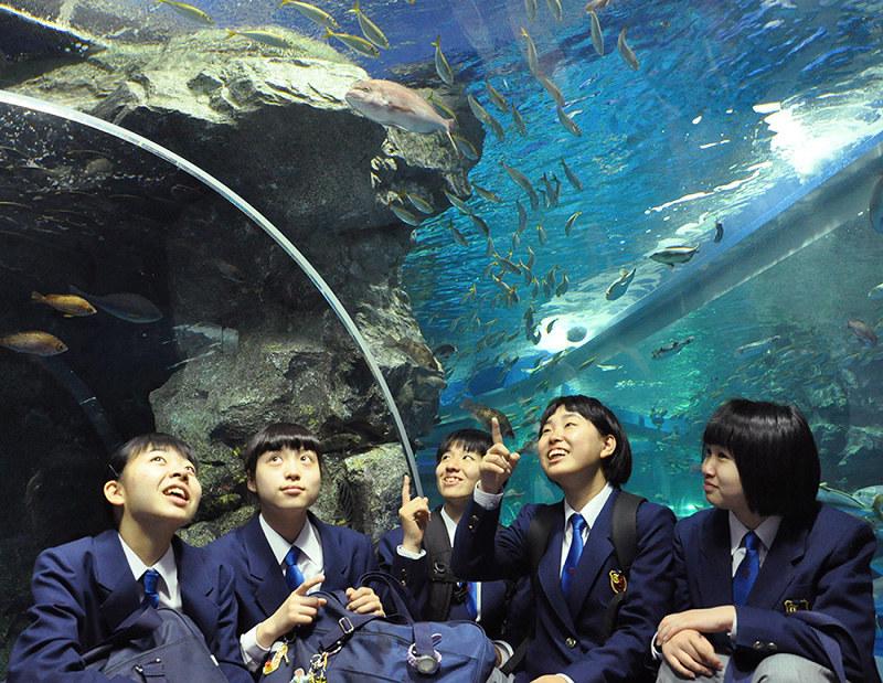 ま の 水族館 とじ 交通アクセス