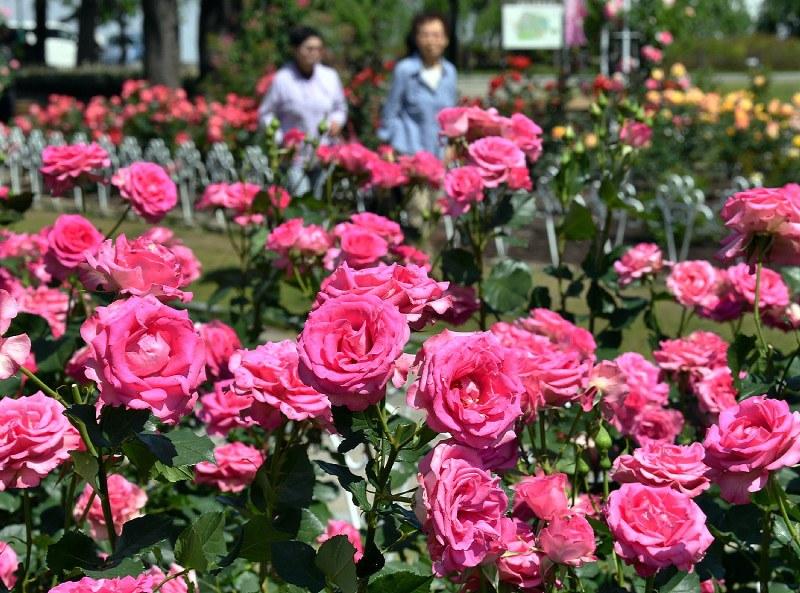 Hasil gambar untuk Stop and Smell the Roses
