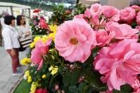 「国際バラとガーデニングショウ」の内覧会で、色とりどりのバラなどを楽しむ来場者ら=埼玉県所沢市のメットライフドームで2018年5月17日午後、渡部直樹撮影