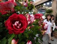 「国際バラとガーデニングショウ」の内覧会で、色とりどりのバラなどを楽しむ来場者ら=埼玉県所沢市のメットライフドームで2018年5月17日午後5時12分、渡部直樹撮影