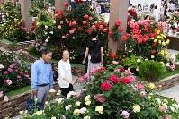 「国際バラとガーデニングショウ」の内覧会で、色とりどりのバラなどを楽しむ来場者=埼玉県所沢市のメットライフドームで2018年5月17日午後4時半、渡部直樹撮影