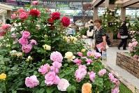 「国際バラとガーデニングショウ」の内覧会で、色とりどりのバラなどを楽しむ来場者ら=埼玉県所沢市のメットライフドームで2018年5月17日午後3時38分、渡部直樹撮影