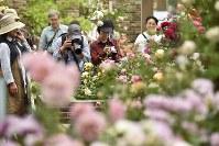 「国際バラとガーデニングショウ」の内覧会で、色とりどりのバラなどを楽しむ来場者ら=埼玉県所沢市のメットライフドームで2018年5月17日午後3時28分、渡部直樹撮影