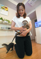 Ayako Higuchi, the owner of two otters that rose to international fame on Instagram, holds small-clawed river otter Aoi while the elder Takechiyo walks behind her in Tokyo's Shibuya Ward, on May 18, 2018. (Mainichi)