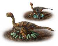 This illustration, created by Masato Hattori and provided by Nagoya University, shows reconstructions of two oviraptorosour, a type of feathered dinosaur, incubating eggs.