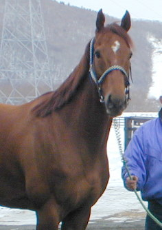 This file photo dated January 18, 2002, shows T M Opera O following his retirement. (Mainichi)