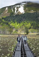 Hikers enjoy skunk cabbages in full bloom at marshland in Oze National Park on May 24, 2018, the opening day of the summer hiking season, in the village of Katashina, Gunma Prefecture. (Mainichi)