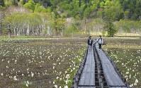 尾瀬国立公園が山開きを迎え、ミズバショウが見ごろを迎えた尾瀬ケ原を歩く登山者ら=群馬県片品村で2018年5月24日、手塚耕一郎撮影