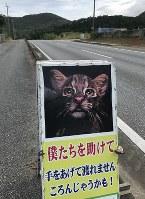 沖縄・西表島では道路脇に看板を設置しイリオモテヤマネコの事故防止を呼びかける=佐藤敬一撮影