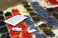市場では新鮮なフルーツが売られている。こまめに買ってビタミン補給