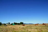牛や馬がのんびり休む牧草地を歩く巡礼者