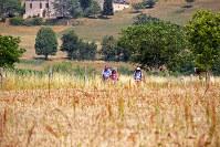 巡礼道を歩いていると、つくづくフランスは農業国であることを実感する