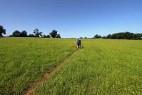 牧草地のなかを踏み跡程度に続く巡礼道。ときにはこんな小径も