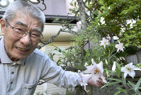 花を咲かせたササユリ。井上繁さんの庭は獣から逃れるシェルターになっている=京都府宮津市惣で、安部拓輝撮影