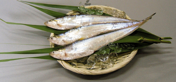 エツ:有明海の珍魚 希少な郷土料理PR 佐賀で17日 - 毎日新聞