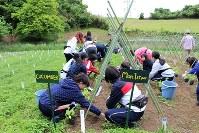 楽しそうに農作業をする学生たち=東京都多摩市の大学内農園で