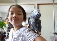 ヨウムの「あさひ」と次女みさ希さん=東京都内の長岡さん宅で