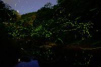 川の周辺を飛び交うホタル=兵庫県川西市黒川周辺の小川で2018年6月4日午後8時20分~同49分に撮影した4枚の写真を合成、石川勝義撮影