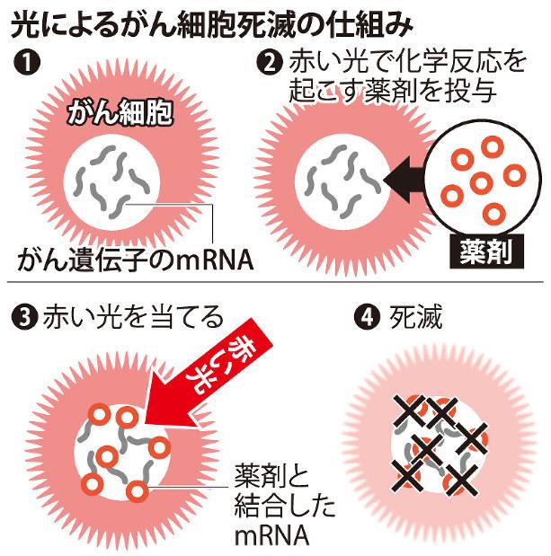 がん細胞:赤い光で死滅 薬剤、遺伝子狙い撃ち 甲南大 - 毎日新聞