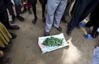 「これを食べているんだ」。牛の奪い合いによる争いを逃れた人たちが住む集落を訪れると、住民が集まって地面に草を置き、食糧不足を訴えた=南スーダン・テレケカで2018年4月16日、小川昌宏撮影