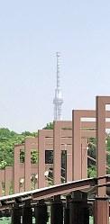 上野動物園から撮影した東京スカイツリー。先端が左に傾いているように見える=鴨志田公男撮影