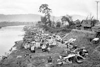 地割れした河川敷にも多くの市民が避難した=福井市・幸橋際の足羽川河川敷で1948年6月撮影