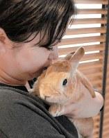 ウサギの骨は密度が低く、落下の衝撃などで折れやすい。立ったまま抱くのは禁物だ=東京都練馬区で、梅田啓祐撮影