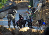 Rescue dogs wait to resume a search in the town of Kumano, Hiroshima Prefecture, on July 10, 2018. (Mainichi)