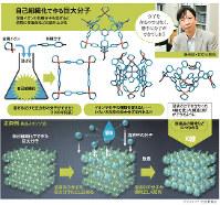 自己組織化で作る巨大分子