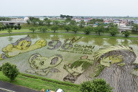 Art images of anime characters designed by legendary animator Osamu Tezuka are on display in a rice field in the village of Inakadate, Aomori Prefecture, on July 9, 2018. (Mainichi)