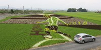 An art image of Japan national soccer team midfielder Keisuke Honda is on display in a rice field in the Mita district of Oyama, Tochigi Prefecture, on June 28, 2018. (Mainichi)