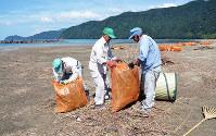 漂着した枯れ草などをごみ袋に詰める清掃活動参加者=京都府舞鶴市の神崎海水浴場で、鈴木健太郎撮影