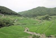 長崎県平戸市の平戸島西岸に位置する春日集落には禁教期からの棚田が広がる。海風が心地よかった=森忠彦撮影